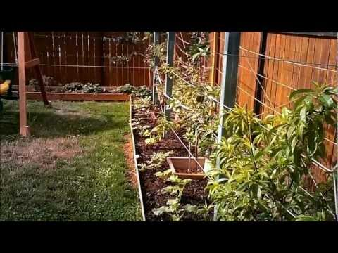 High Density Organic Gardening – Part 1
