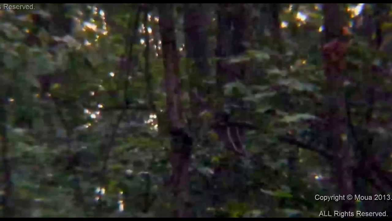 Real Sasquatch caught on tape!! Rare! MUST SEE! - YouTube