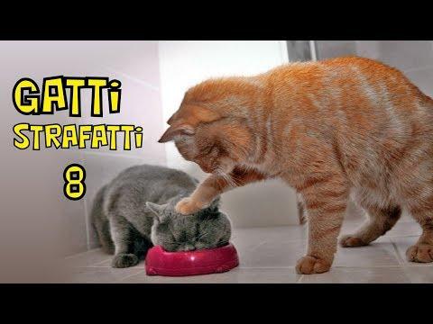 GATTI STRAFATTI episodio 8