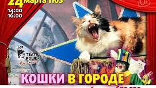 """Театр Куклачева """"Кошки в городе"""" приедет в Иркутск!"""