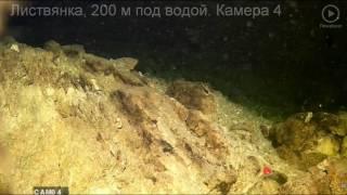 Байкал в режиме реального времени - подводная видеокамера
