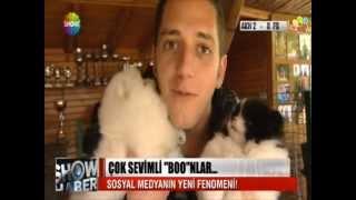 Pomeranian Boo Yavruları Show Anahaber'de