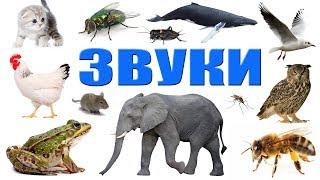 Звуки животных, насекомых , птиц и не только! Как говорят животные. Развивающее видео для детей.