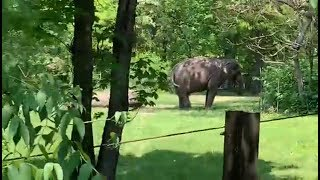 Bronx Zoo's Wild Asia Monorail, May 2019