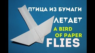 видео Как летит птица?