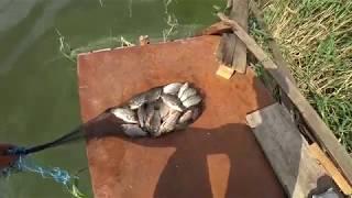КАРАСЬ НА ДОНКУ | river fishing