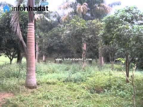Bán đất chính chủ huyện Quốc Oai, xã Phú Mẫn.wmv