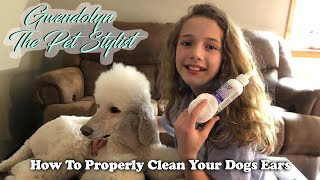 How To Properly Clean Your Dogs Ears