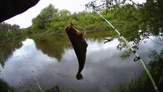 Рыбалка на утренней зорьке на донную снасть 23 05 2020