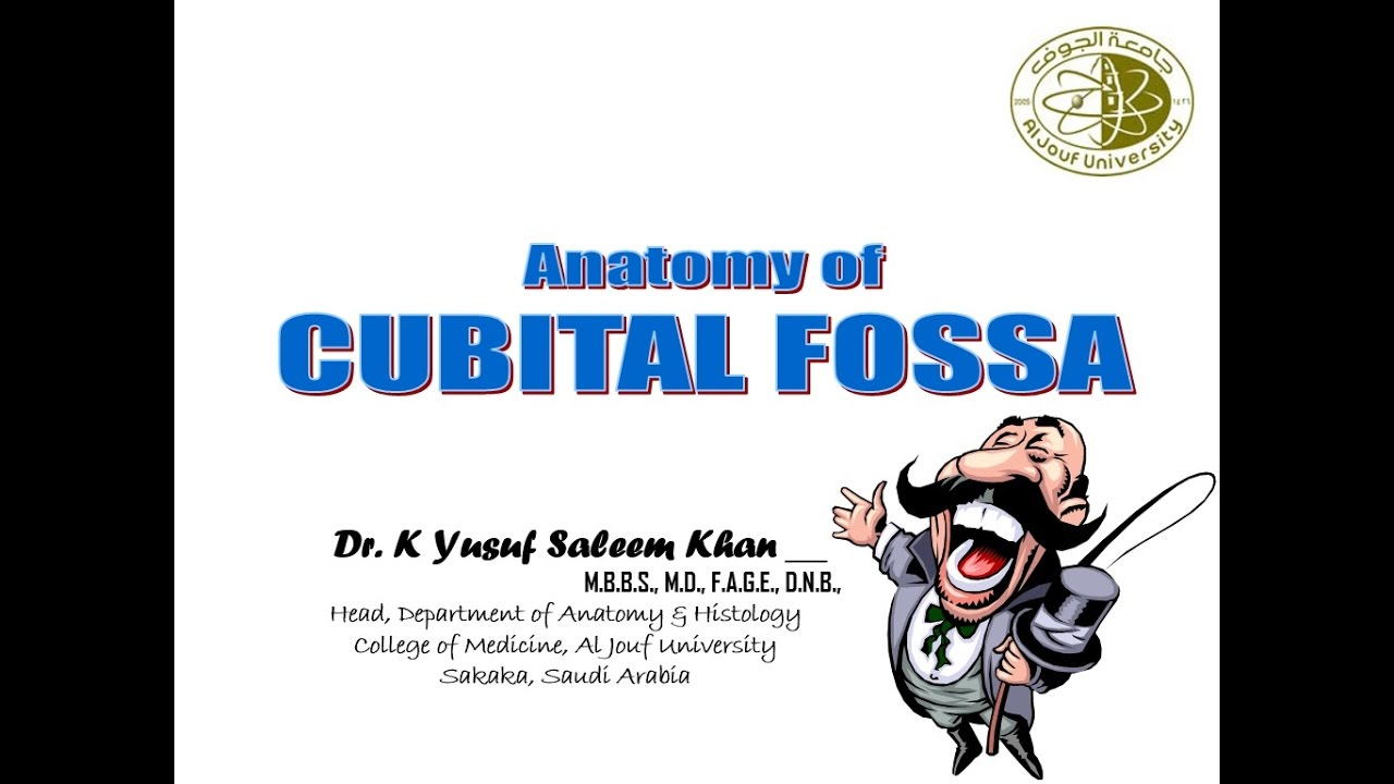 Lecture on Anatomy of Cubital Fossa - YouTube