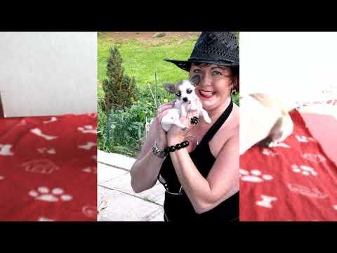 40-01-31-01 #Chihuahua, #Hundeschnupfen, Musik, Sterntaler Duo,  #Hausmittel, #Krankheit, Baulexikon