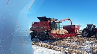 Hiver hâtif : l'appel à l'aide de producteurs de grain