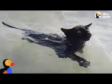 Rescue Cat LOVES Swimming In The Ocean | The Dodo