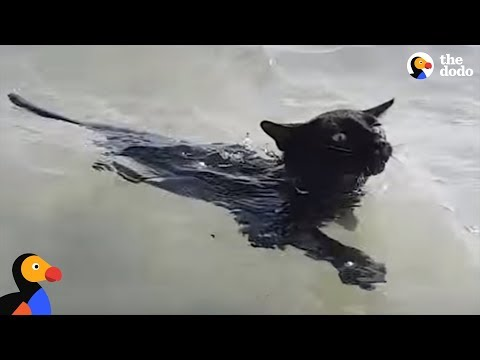 Rescue Cat LOVES Swimming In The Ocean | The Dodo