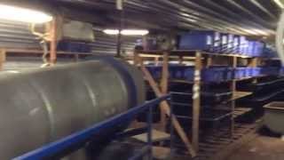 Mega Huge European Worm Farm! Yup I Am Excited!