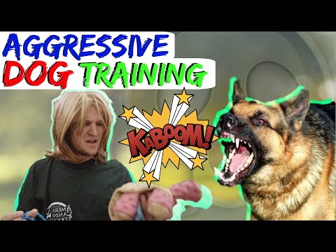 How to stop Dog Reactivity -Aggressive German Shepherd Saved with the place and stay commands