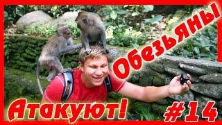 Путешествие по Бали - обезьяны АТАКУЮТ! Лес обезьян в Убуде (продолжение) | #14(Продолжение видео про лес обезьян на Бали в Убуде - мы приехали сюда еще раз и было очень интересно. Если..., 2015-11-30T13:00:00.000Z)