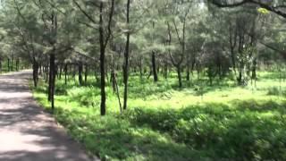 台東森林公園騎自行車於木麻黃林路段 thumbnail