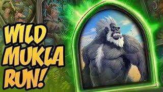 Wild Mukla Run!   Saviors of Uldum   Hearthstone