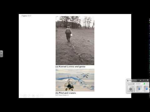 Behavior Video Lecture