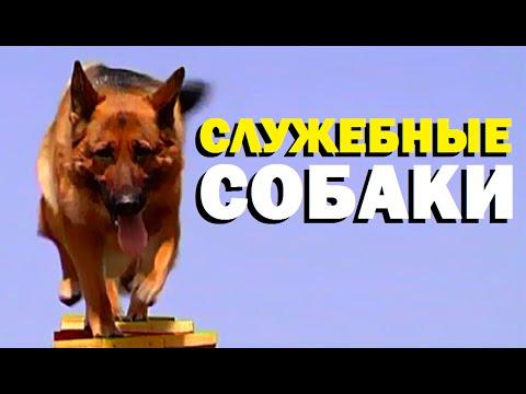 Галилео. Служебные собаки
