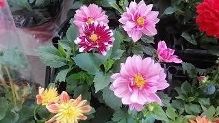Цветочный рынок 5 мая 21 года