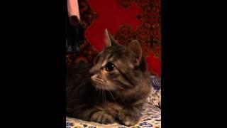 Кошка понимает русский язык ))