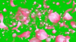Green screen flower animation HD fx effect with sound.Flowers petals falling Green screen.