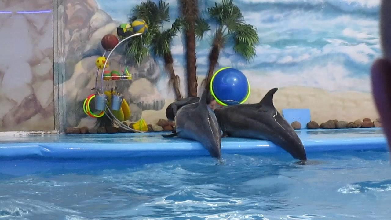 Дельфин и русалка. Дельфинарий, Минск. - YouTube