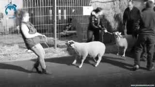 Maltraitances animales au Salon de l