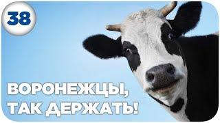 Корова за 130.000 евро   МП#38