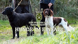 Hundearbeit  - Entenjagd - K&K Premium Jagd