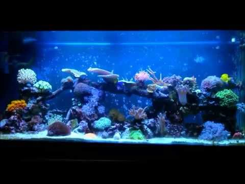 Part 7. The Power head. How to bild a reef tank.