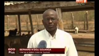 ECO Plus : activités des stations d'élevages de Yamoussoukro et de Toumodi