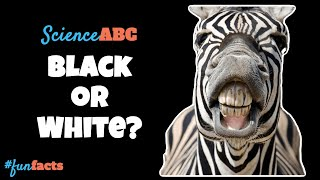 Are Zebras Black with White Stripes or White with Black Stripes?