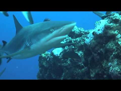 Scuba Dive Asia Yap Micronesia Manta Ray Resort dive resort Sharks