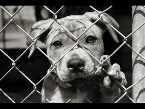 popular culture animal abuse