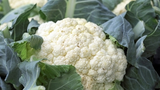 LEARN GERMAN Picture Dictionary  ► der Blumenkohl ⇔ cauliflower ◄ Vocabulary   Example Sentences