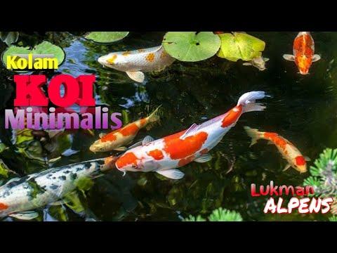 kolam koi minimalis anak kampung - youtube