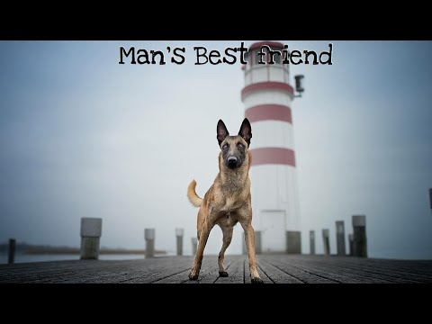 Belgian Malinois | Man's Best Friend |