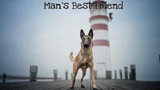 Belgian Malinois | Man's Best Friend |