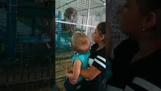 Хорошие детки В зоопарке КОРМЯТ Обезьяну 😄