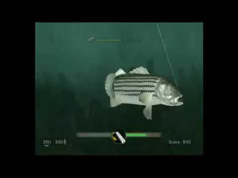 Rapalas Fishing Frenzy Gameplay