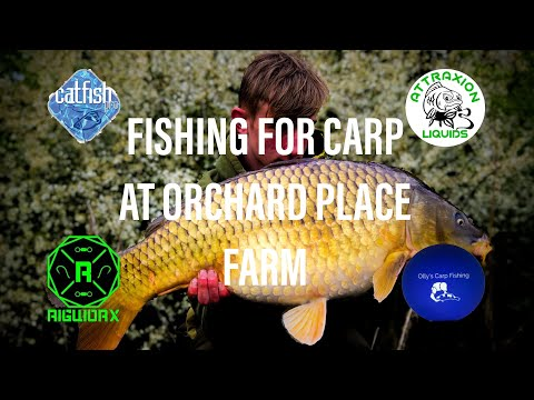 FISHING FOR CARP AT ORCHARD PLACE FARM