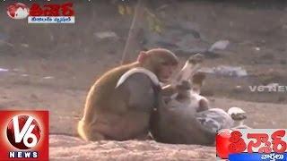 Funny Monkey   Dog And Monkey Friendship   Weekend Teenmaar News - V6 News