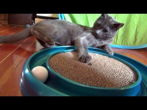 Our Turbo Scratcher Cat Toy Lovin' Cats