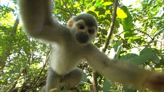 Squirrel Monkey Outtakes