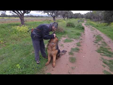 Εκπαιδευση σκυλων - advance training - k9training.gr