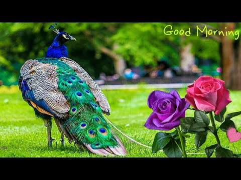 Good Morning Video Beautiful Whatsapp Status Wishes Greetings Quotes Sms Gif Messages Video Youtube