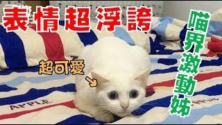 【豆漿 - SoybeanMilk】超誇張的表情跟動作 喵喵激動姊登場!!